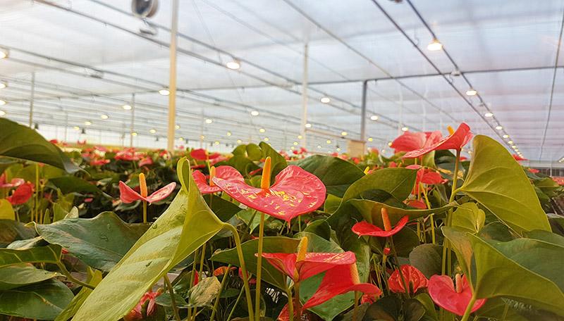 Spekflowers optimaliseert energiemanagement